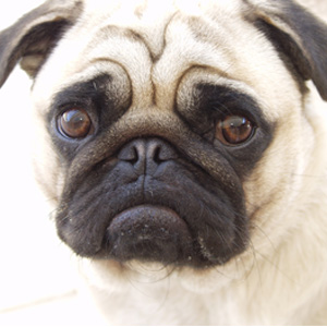 Pet Shop Cussy Rações